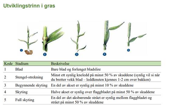Utviklingstrinn gras